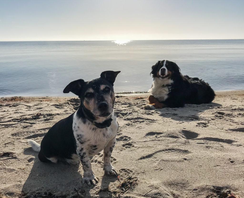 Elvis und Emma Hunde